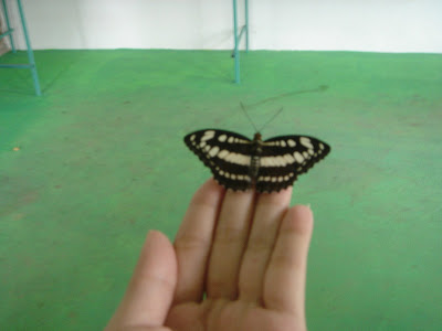 New born butterfly on my hand !